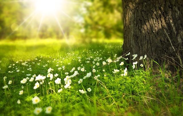 flowers-tree